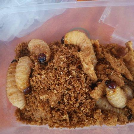 Blutod. Special Sabahan cuisine.