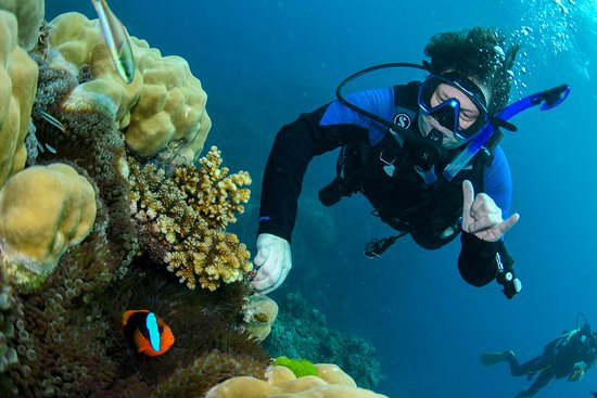 Great Barrier Reef Eco Snorkel and Dive Cruise from Cairns - Including Lunch: Professional posed picture
