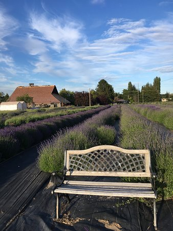 The Lavender Connection (Sequim) - UPDATED 2019 - All You