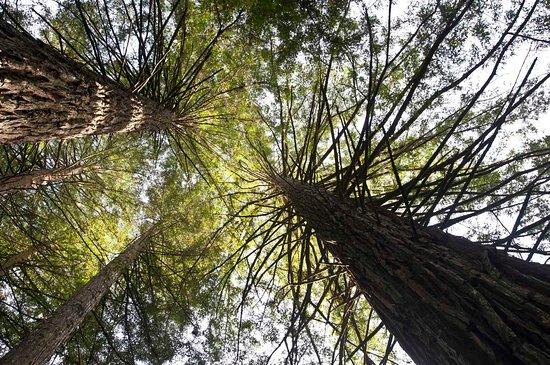Parque das Sequoias