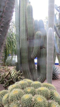 Cactus en los Jardines de Majorelle de Marrakech.