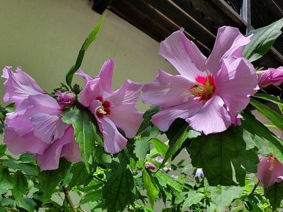 unique hibiscus flowers
