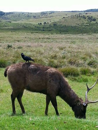 Horton Plains National Park