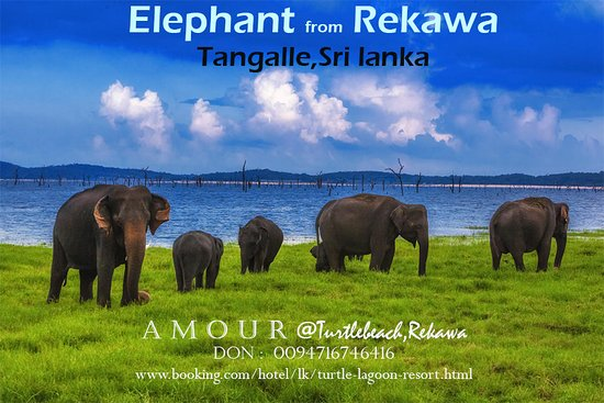 Elephant at Udawalawe.From Rekawa just 50 to 60 minutes.