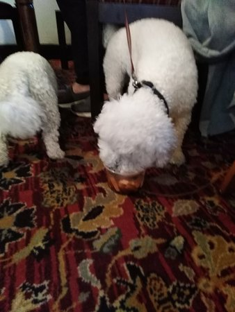 The Old Inn- Mullion: dogs loved their dinner