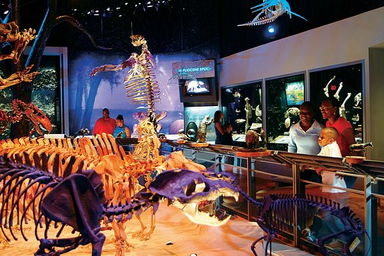 """The """"Florida Fossils: Evolution of Life and Land"""" exhibit features more than 500 fossils, many of which were discovered within a 100-mile radius of Gainesville."""