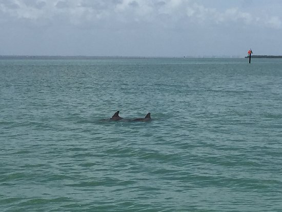 Paradise Boat Tours: Dolphins!