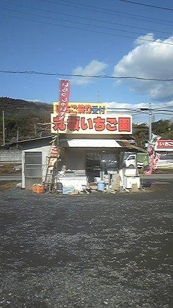 Ishioka, اليابان: イチゴ狩りが楽しめます