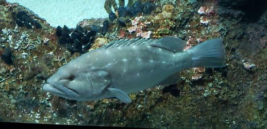 National Aquarium: National Aquarium