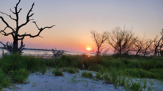 sunrise driftwood beach