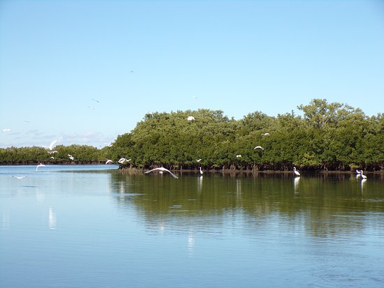 We have hundreds of Mangrove Islands to visit & few exotic birds & fish