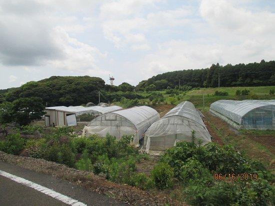Iki Kazatami no Sato