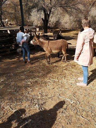 Karoo Donkey Sanctuary