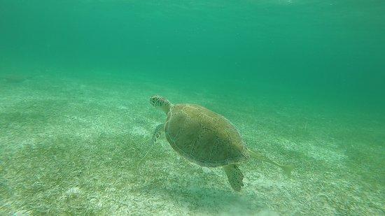 Private Half Day Trip: Sea Turtles