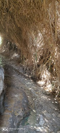 Dead Sea Region, Israel: En Gedi Nature Reserve
