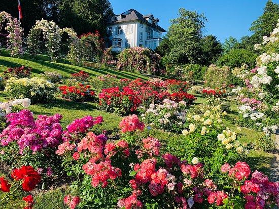 Rosengarten auf dem Beutig
