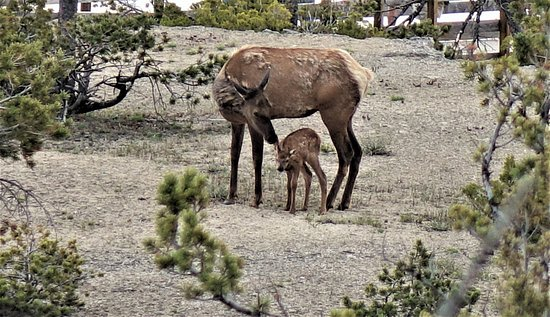 Near Hotel New Born Baby Picture Of Mammoth Hot Springs