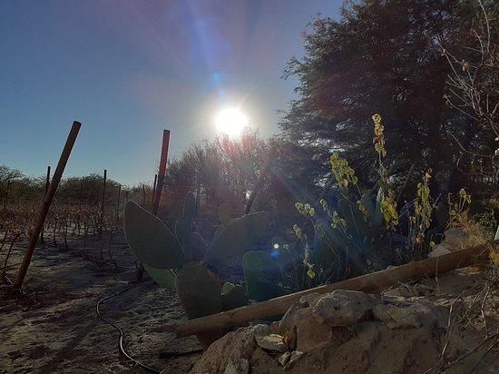 AYLLU, LA RUTA DEL VINO DEL DESIERTO. 🍷 Vivamos juntos la magia y belleza de San Pedro de Atacama. Chile, TURISMO, HOTELERIA Y RESTAURANT, Reserva ahora! +569 42749565