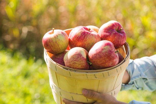 La Vieille Ferme: Auto-cueillette de pomme Saguenay