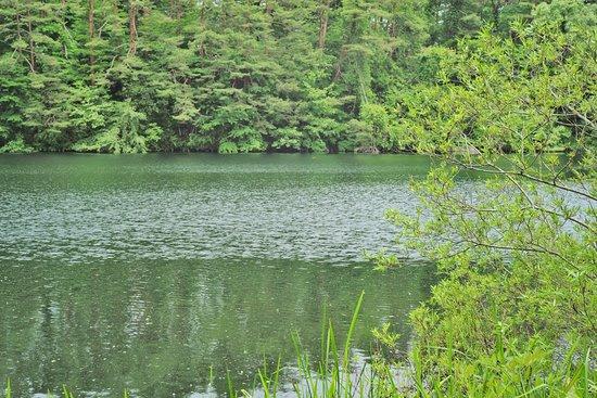 Kitashiobara-mura, Japan: 6月末の柳沼