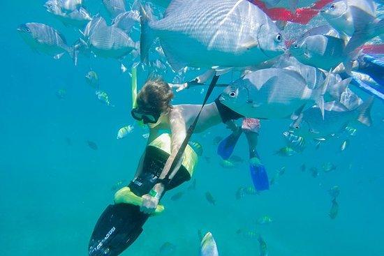 Los Cabos Sea Adventure: Snorkeling