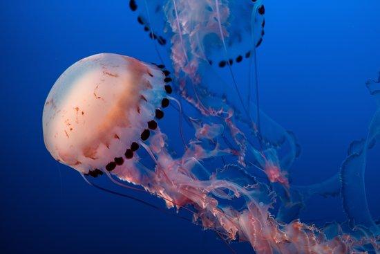 Calypso Diving Bali