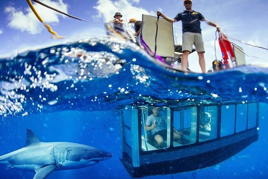 White Shark Tour with Optional Cage...