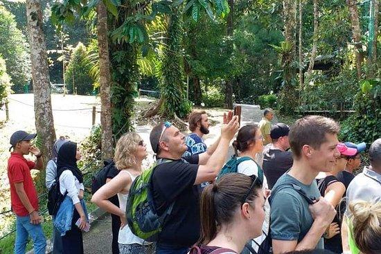 Centro Orangután de Semenggoh de...