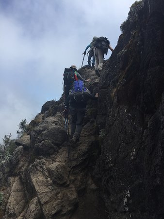 kilimanjarodreamadventures: #kilimanjaro #tanzania #africa #travel #adventure #hiking #mountains #mountain #nature #trekking #climbing #mountkilimanjaro #wanderlust #summit #kili #explore #travelphotography #photography #travelgram #mtkilimanjaro #hike #uhurupeak #safari #instatravel #landscape #photooftheday #outdoors #sevensummits #trek #mountaineering kilimanjaro #tanzania #uhurupeak #africa #mountkilimanjaro #travel #summit #hiking #mountain #mountains #adventure #trekking #mountaineering #climbing #mtkilimanjaro #uhur