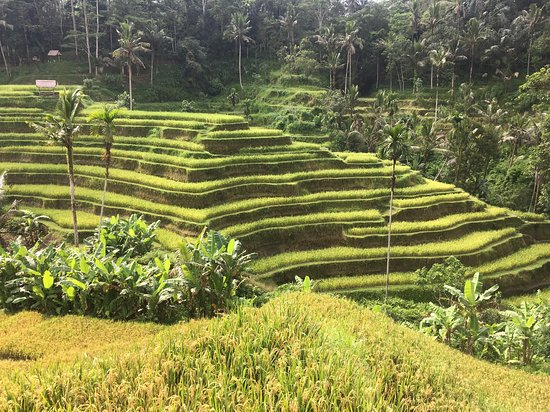 Bali Ancient Tours
