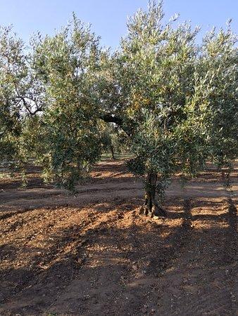 Azienda Agricola Moceri Giuseppe