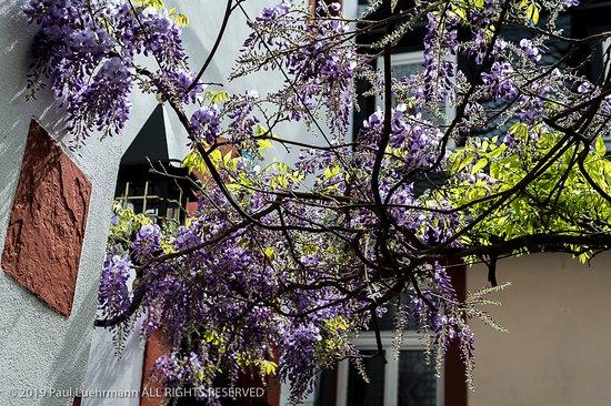Doctor-Weinstuben Hotel: The overhead trees and plants in the garden