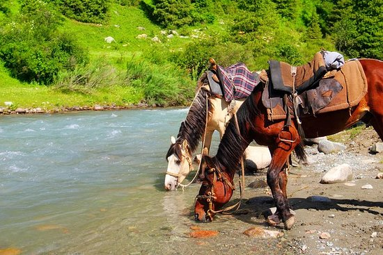 Horse Riding in Shamsi Gorge