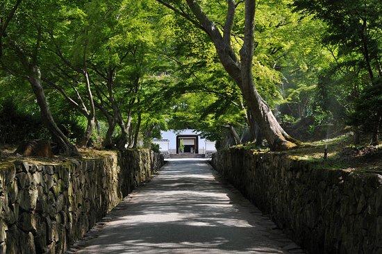 Koshoji Temple: 琴坂は青紅葉も美しい