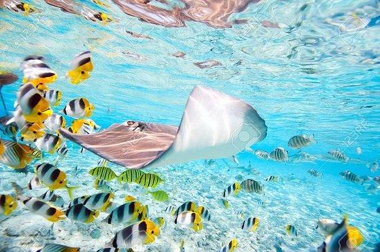 波拉波拉半日團體旅遊,包括浮潛與鯊魚和光線