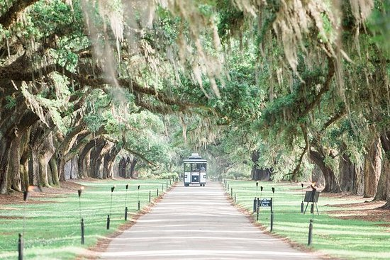 Boone Hall Plantation All-Access Admission Ticket: Boone Hall Plantation Admission with Guided House Tour