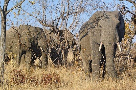 5 días Todo Incl. Kruger Park Safari...