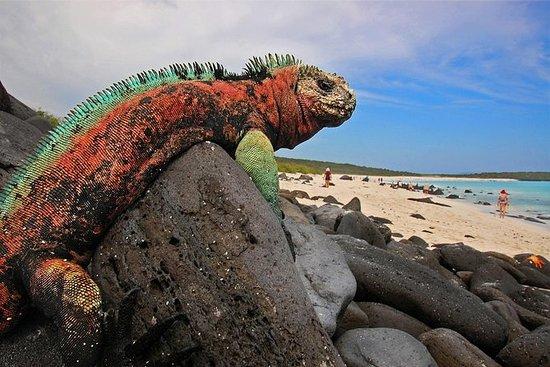 Viagem de Assinatura de Galápagos