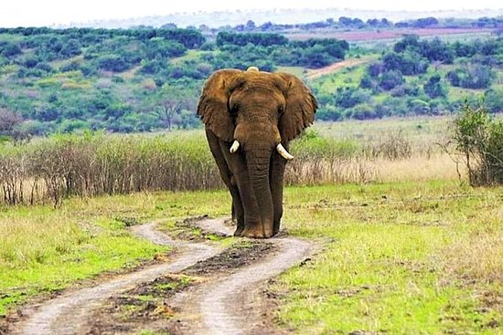 Akagera National Park Safari & Lake...