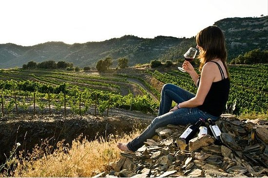 Valle de Guadalupe Vinsmaking