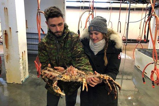 帝王蟹和海鲜工厂参观海鲜品尝