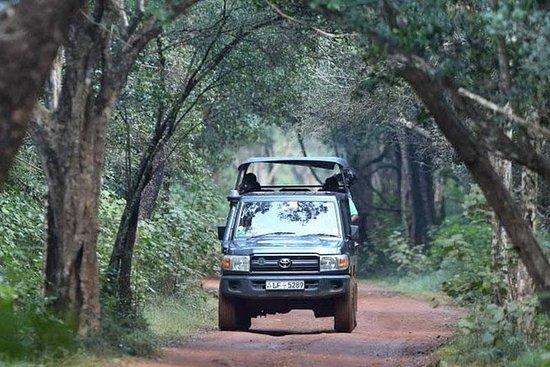 Jeep Safari i Yala nasjonalpark