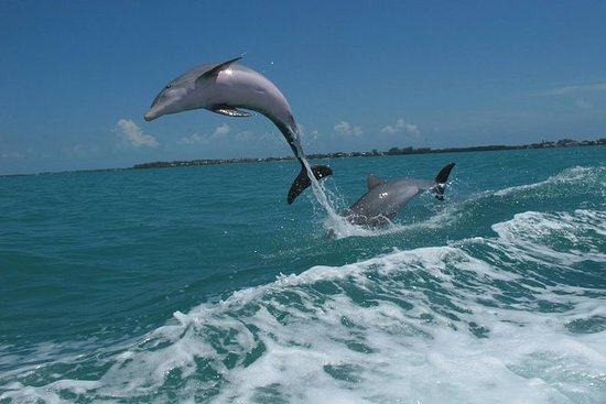 Image result for dolphins swimming with boat key west