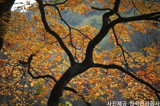 Oppdag Spectacular Songnisan National...