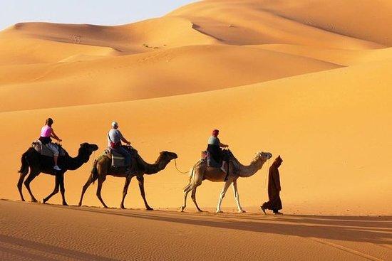 Dubai Desert Safari Red Dune BBQ-kameel ...