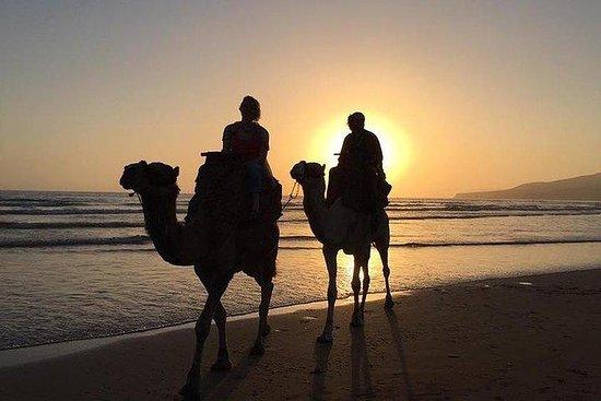2 timer Sunset Camel Ride i Agadir