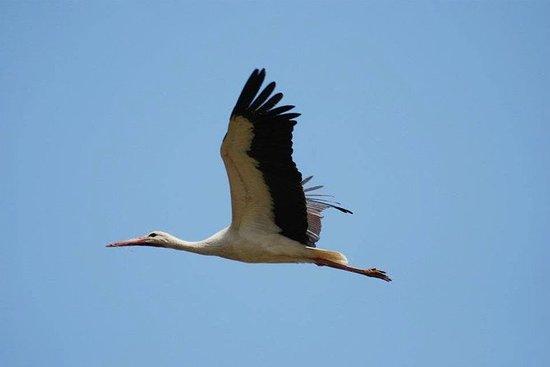 Tour de observación de aves en la...