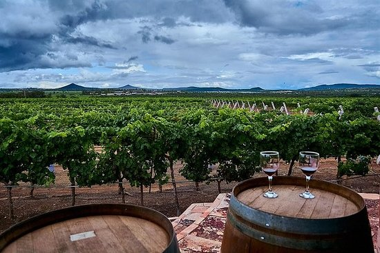 Mexico: Privat vin og ost tur til...