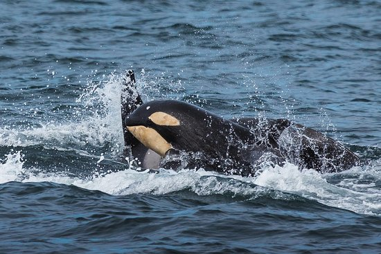 Laki Tours Whale Watching - Olafsvik