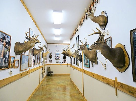 The Spear Hunting Museum: inside